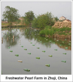 Freshwater Pearl Farm in Zhuji, China